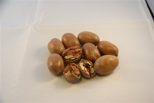 Pecans -- In Shell